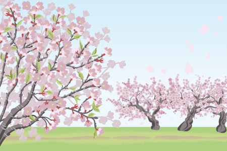 Cherry Tree landscape Vector