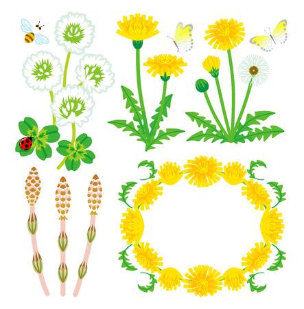 four leafed clover: Flores silvestres de primavera aislados Vectores