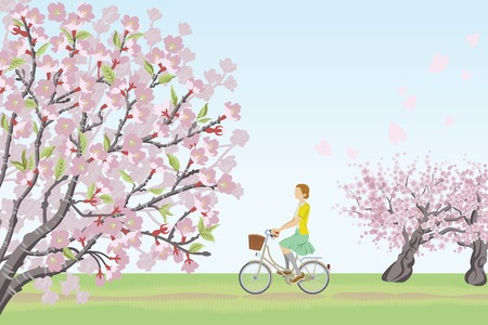 tree lined street: Woman riding bicycle in Row of cherry blossom trees