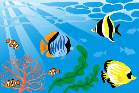 Underwater, Tropical Fish and Sea Life