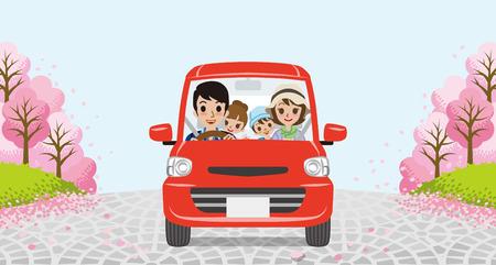 cherry trees: Driving family-Row of cherry trees