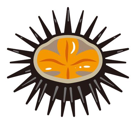urchin: Sea urchin Illustration