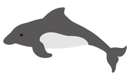 aquatic mammal: Dolphin
