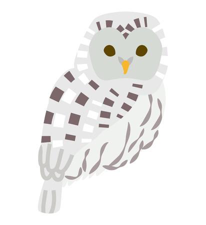 ural owl: Owl Illustration