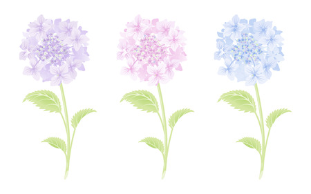 spring out: Hydrangea Single Flower Three color set