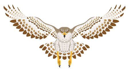 talons: Flying Hawk ,Front view, Isolated