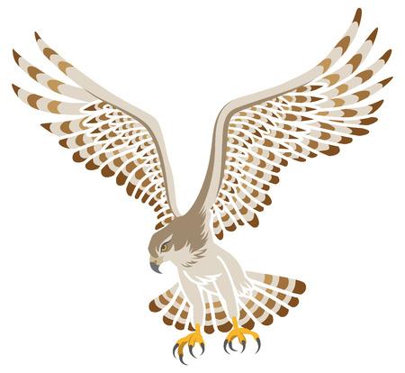 Flying Hawk ,Isolated