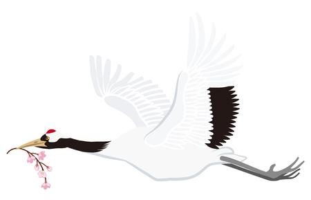 eurasian: Flying Japanese crane, Isolated