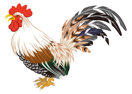 crowing: Crowing Rooster Isolated