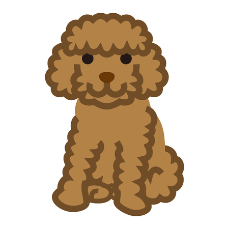 Miniature Poodle Simple cartoon Illustration