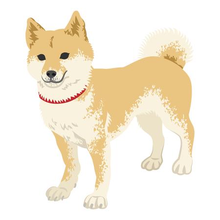柴犬クリップアート - 立っている、フルの長さ