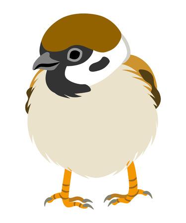 Japanese Sparrow Illustration-Front view Illustration