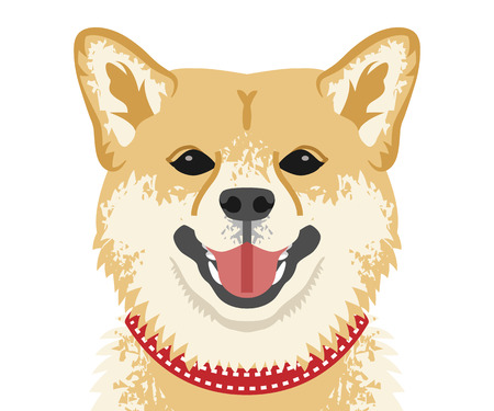 Shiba inu face close-up, Front view