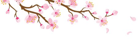 Rama de flor de cerezo y pétalos que caen