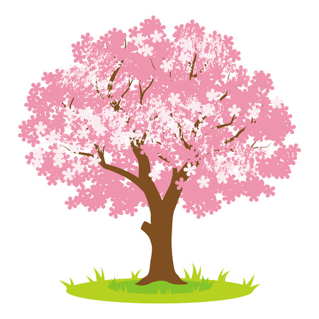 Cherry tree during spring time.