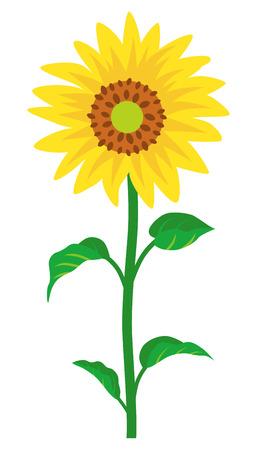 Sunflower -single object