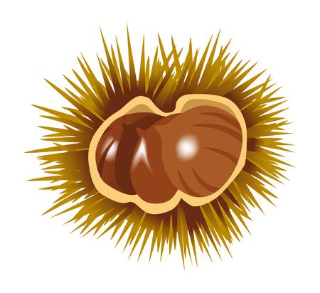 Chestnut clip art