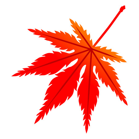 Red colored maple leaf