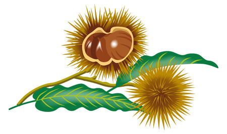 Chestnut branch clip art Vectores