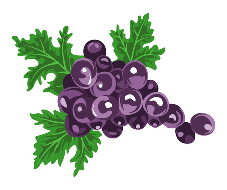 Grape - fruit clip art  イラスト・ベクター素材