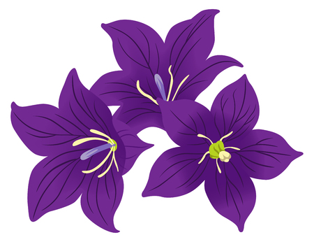Bellflower Three Flower heads Decoration Illustration