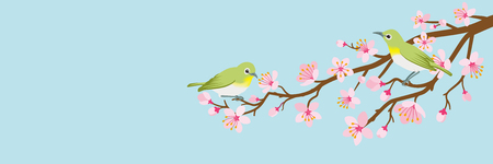 Two small birds perch on cherry blossom branch -Zosterops japonicas, Header ratio