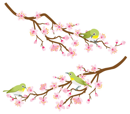 Small birds perch on cherry blossom branch -Zosterops japonicas, Two branches set