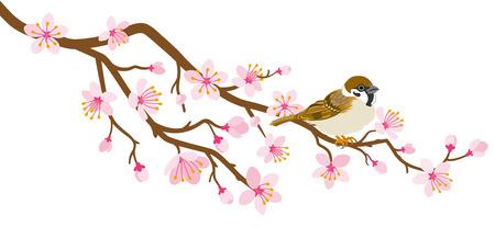 Perca de pájaro pequeño en rama de flor de cerezo - Gorrión de casa
