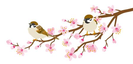 Dos pájaros pequeños se posan en la rama de los cerezos en flor - Gorrión de la casa Ilustración de vector