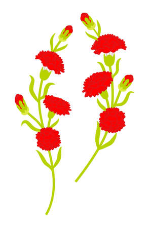 Two wavy line of carnation flowers