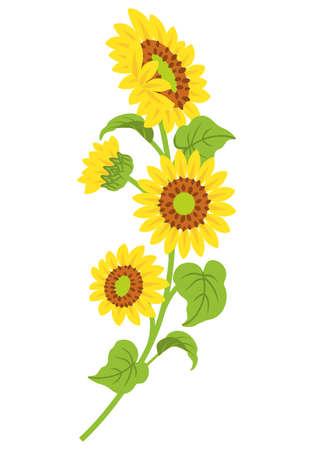 Sunflower decoration - curve line