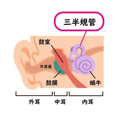 Illustration material of medical semicircular canals 일러스트