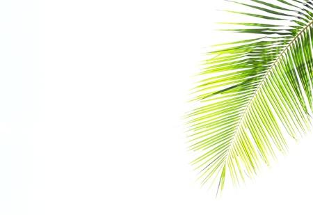 Hintergrund Blätter. Standard-Bild