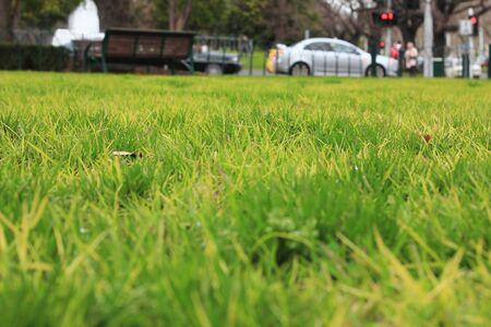 Grass Stock Photo - 15281200