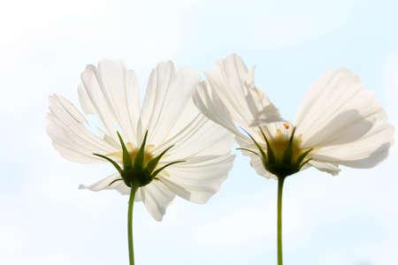 bloom: bloom flower