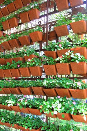 Seedlings in a farm