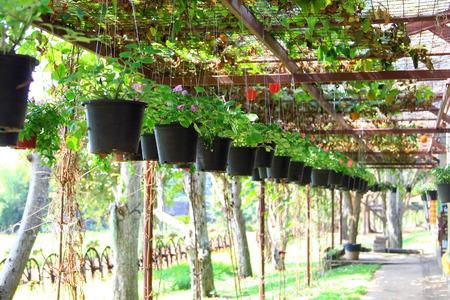Seedlings in farm