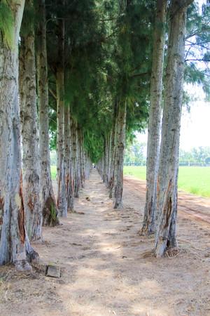 Rows of tree Stock Photo