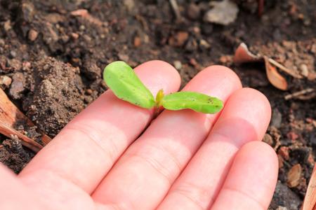 seedlings: Seedlings
