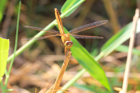 dragonfly in the nature close up