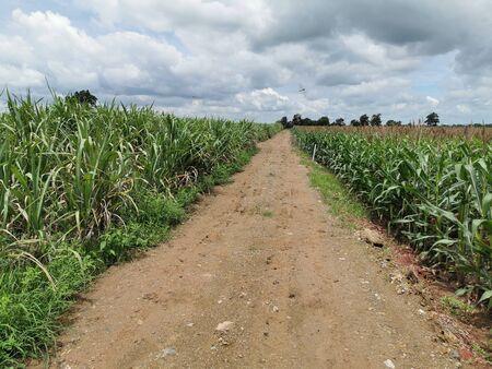 Lateritic dirt road in agricultural plots Standard-Bild