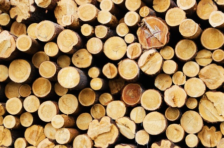 Background with the image of the stacked logs of trees photo
