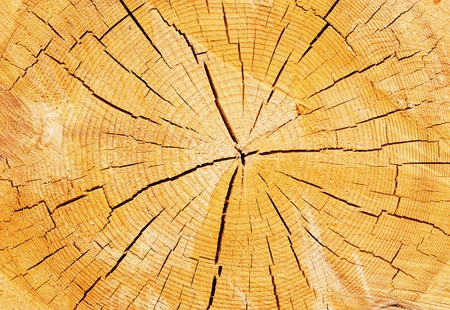 Background with the image of a texture of a tree on a cross-section photo
