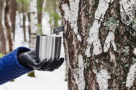 sap: The extraction of birch SAP. mug in female hand, attached to a birch tree to collect birch SAP