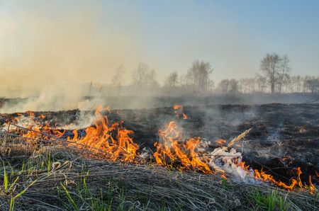 uncontrolled: Strong uncontrolled burning of dry grass in spring