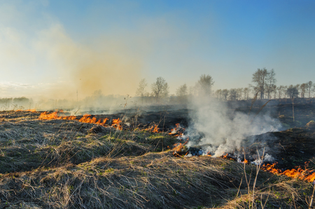 uncontrolled: The uncontrolled burning of dry grass in spring