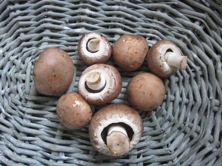 Mushrooms Stock Photo - 19349439