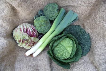 savoy cabbage: Organic Savoy Cabbage, Leeks, Broccoli and Radicchio Stock Photo