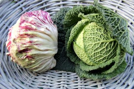 savoy cabbage: Organic Savoy Cabbage and Radicchio
