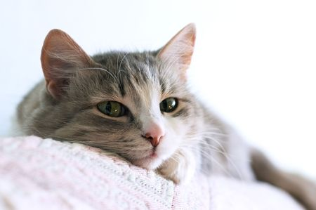 close-up portrait of adorable cat lays on sofa